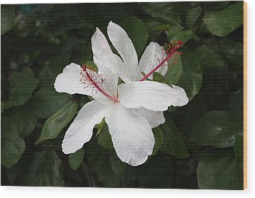 Wood Print featuring the photograph White Hibiscus Twins by Craig Wood