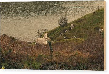 Wood Print featuring the photograph White Horse by Barbara Walsh