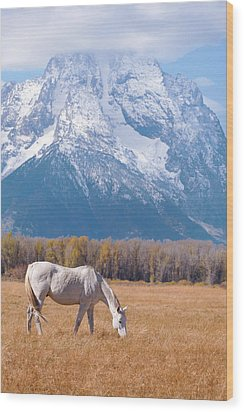 White Horse In Teton National Park Wy Usa Wood Print by Chasing Light Photography Thomas Vela