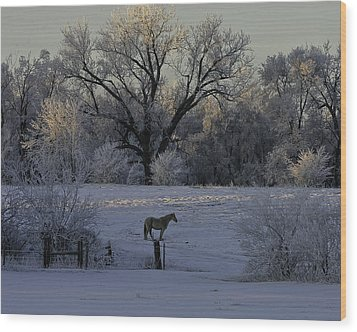 White Horse Winter Wood Print by Kenneth McElroy