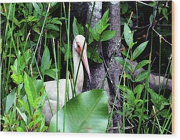Wood Print featuring the photograph White Ibis At The Everglades by Pravine Chester