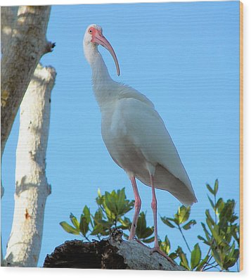 White Ibis In The Treetop Wood Print by Judy Via-Wolff