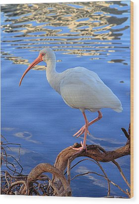 White Ibis Wood Print by Rick Lesquier