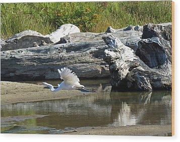 White In Flight Wood Print by Chris Anderson