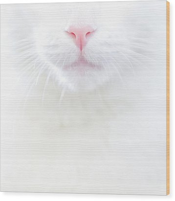 White Kitty Cat With Pink Nose Wood Print by TC Morgan Photography