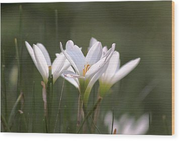 Wood Print featuring the photograph White Lily - Symbol Of Purity by Ramabhadran Thirupattur