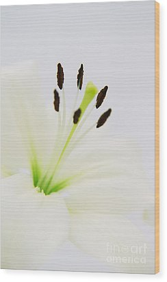 White Lily  Wood Print by Angela Doelling AD DESIGN Photo and PhotoArt