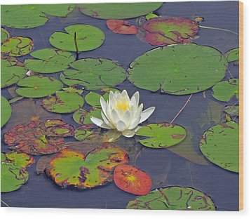 White Lilypad Flower Wood Print
