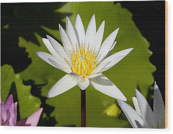 White Lotus Wood Print by Kelley King