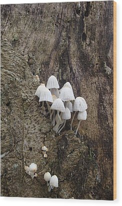 White Mini Mushrooms Wood Print by Koral Garcia