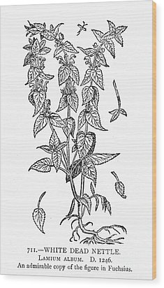 White Nettle Wood Print by Granger