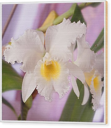 White Orchid Wood Print by Mike McGlothlen