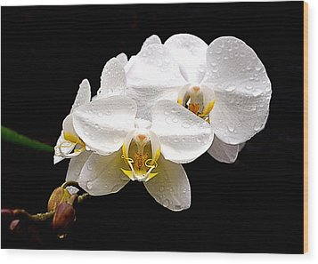 Wood Print featuring the photograph White Orchids by Brian Hughes