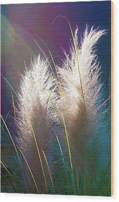 White Pampas Grass Wood Print by Richard Marquardt