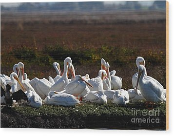 White Pelicans Wood Print by Wingsdomain Art and Photography