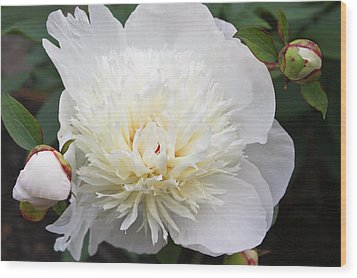 Wood Print featuring the photograph White Peony by Ann Murphy