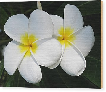 White Plumerias Wood Print by Shane Kelly