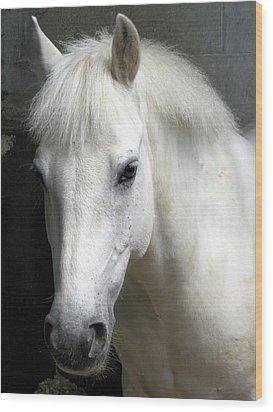 White Pony Wood Print by Sally Crossthwaite