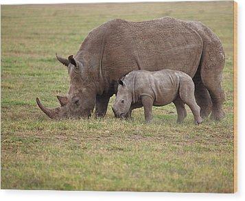 White Rhinocero Grazing Side By Side Wood Print by Achim Mittler, Frankfurt am Main