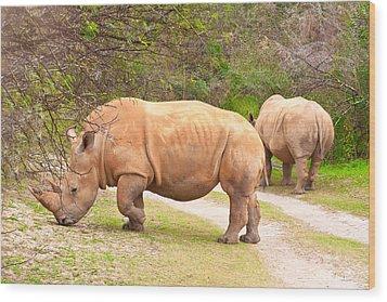 White Rhinoceros Wood Print by Tom Gowanlock