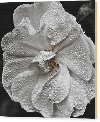 Wood Print featuring the photograph White Rose After Rain by Ronda Broatch