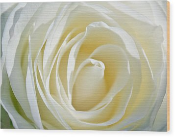 Wood Print featuring the photograph White Rose by Ann Murphy