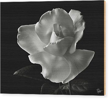 Wood Print featuring the photograph White Rose In Black And White by Endre Balogh