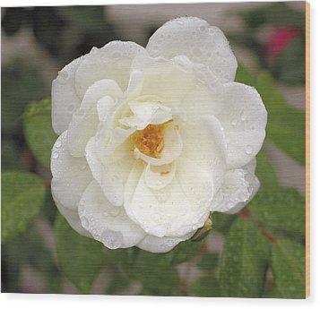 White Rose Wood Print by Judith Szantyr