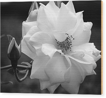 Wood Print featuring the photograph White Rose by Michelle Joseph-Long