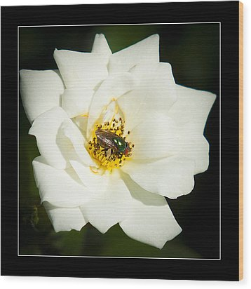 White Rose Wood Print by Miguel Capelo