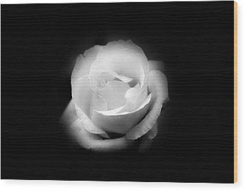 Wood Print featuring the photograph White Rose Petals by Anthony Rego