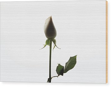 White Rose With Shadow Wood Print by Zafer GUDER