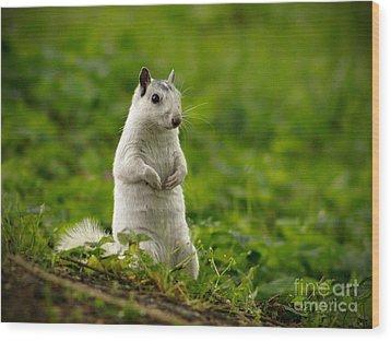 White Squirrel Wood Print by JK York