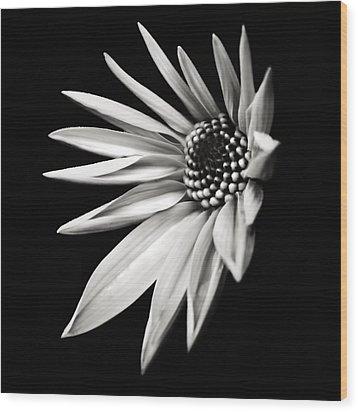 White Star Wood Print by Jaromir Hron