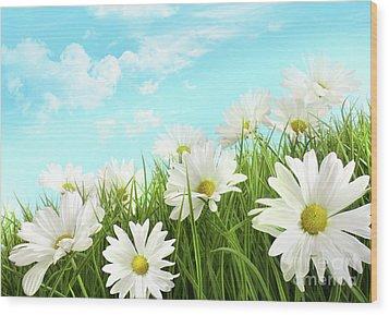 White Summer Daisies In Tall Grass Wood Print by Sandra Cunningham
