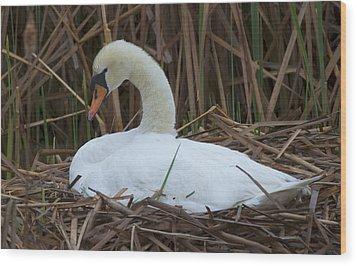 White Swan Wood Print by Ralph Jones