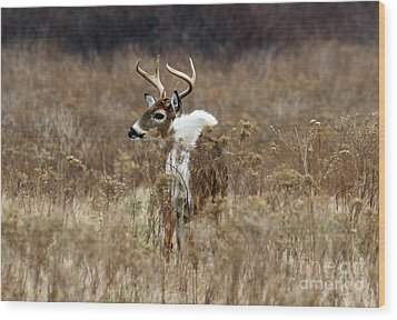 White Tail Wood Print by Butch Lombardi