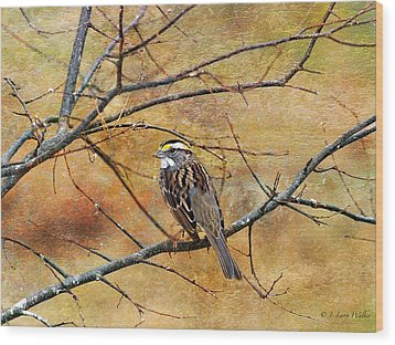 White-throated Sparrow Tweeting Wood Print