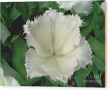 White Tulip Wood Print by AmaS Art