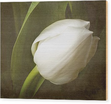 white Tulip Wood Print by Fiona Messenger
