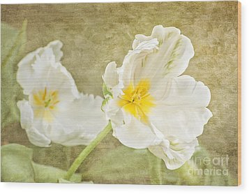 White Tulips Wood Print by Cheryl Davis