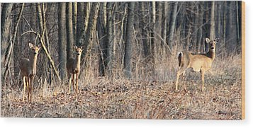 Whitetail Alert Wood Print