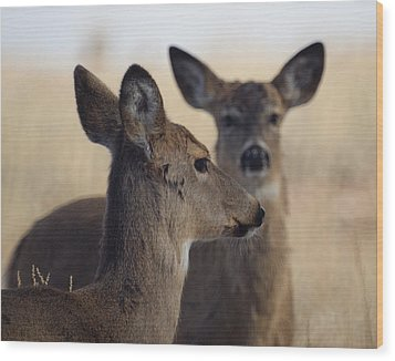 Whitetail Deer Wood Print by Ernie Echols