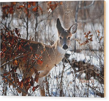 Whitetail Deer In Snow Wood Print by Nava Thompson