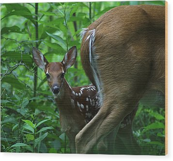 Whitetail Fawn Wood Print by TnBackroadsPhotos