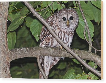 Who Are You Looking At Wood Print by Cheryl Baxter