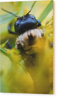 Who Knew Bees Have Mustaches Wood Print by Beth Akerman