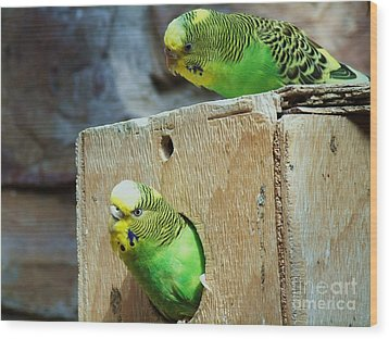 Who's There? Wood Print by Donna Parlow
