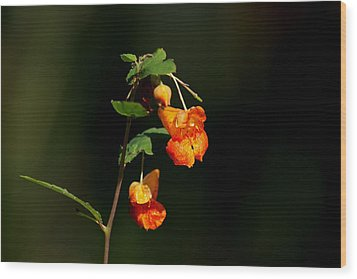 Wood Print featuring the photograph Wild Beauty by Ramabhadran Thirupattur