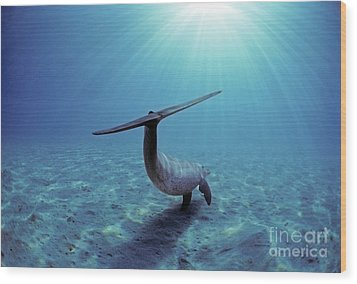 Wild Bottlenose Dolphin Wood Print by Jeff Rotman and Photo Researchers